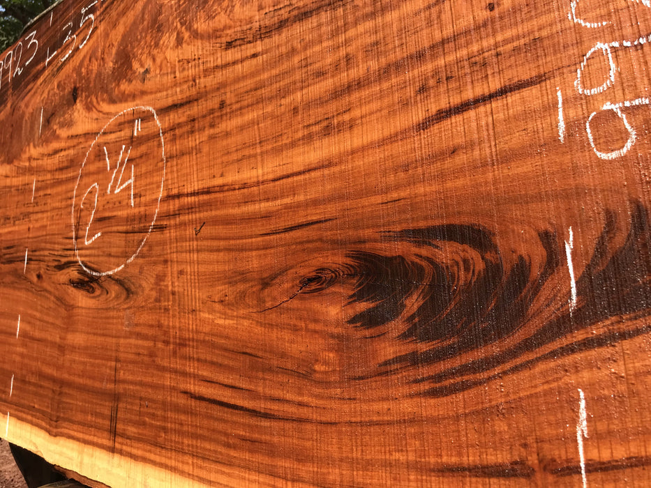 "Goncalo Alves / Tigerwood #9923- 2-1/4"" x 35"" x 96"" FREE SHIPPING within the Contiguous US. - Big Wood Slabs"