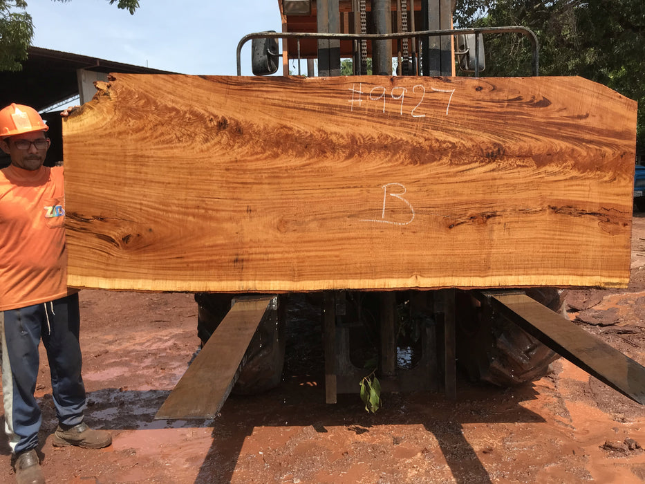 "Goncalo Alves / Tigerwood #9927- 2-1/4"" x 37"" x 100"" FREE SHIPPING within the Contiguous US."