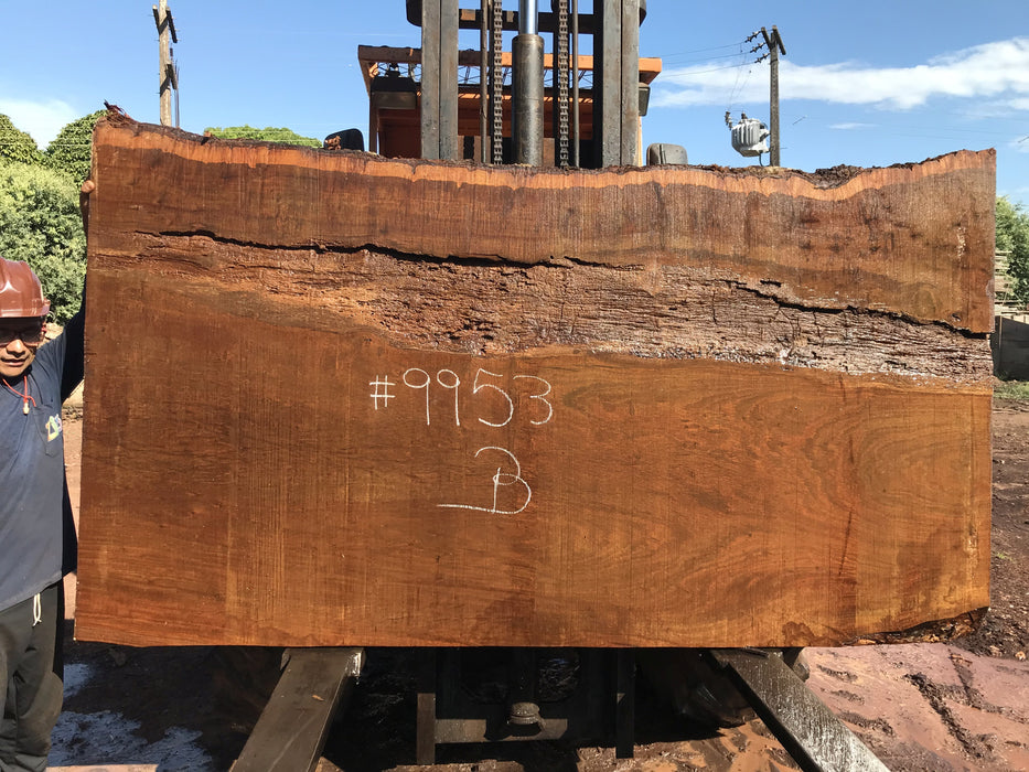 "Ipe / Brazilian Walnut #9953 - 2-1/4"" x 51"" to 55"" x 97"" FREE SHIPPING within the Contiguous US. - Big Wood Slabs"