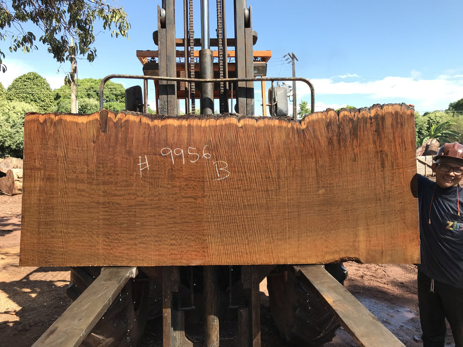 "Ipe / Brazilian Walnut #9956 - 2-1/4"" x 35"" to 39"" x 96"" FREE SHIPPING within the Contiguous US. - Big Wood Slabs"