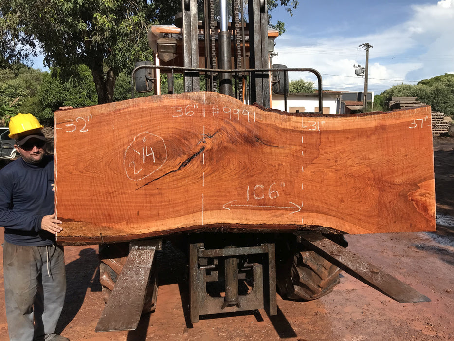 "Jatoba / Brazilian #9991 – 2-1/4″ x 31″ to 37″ x  106"" FREE SHIPPING within the Contiguous US. - Big Wood Slabs"