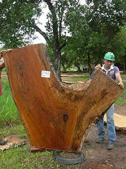 "Quaruba - 2 1/2"" x 35"" to 86"" x 72"" - Big Wood Slabs"