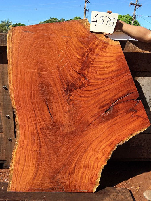 "Cumaru / Brazilian Teak - 2-1/2"" x 30"" to 44"" x 54"" - Big Wood Slabs"