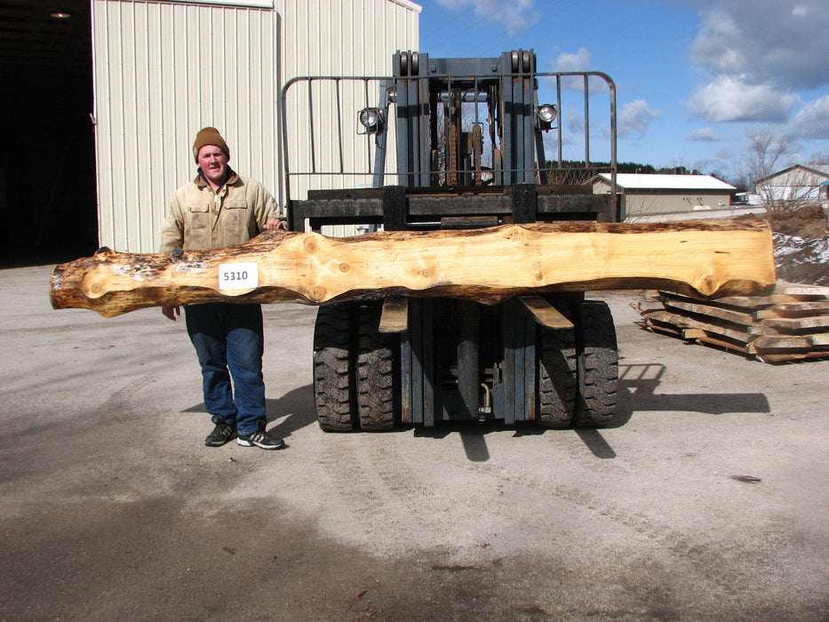 "Spruce #5310 - 3"" x 4"" to 13"" x 149"" FREE SHIPPING within the Contiguous US. - Big Wood Slabs"
