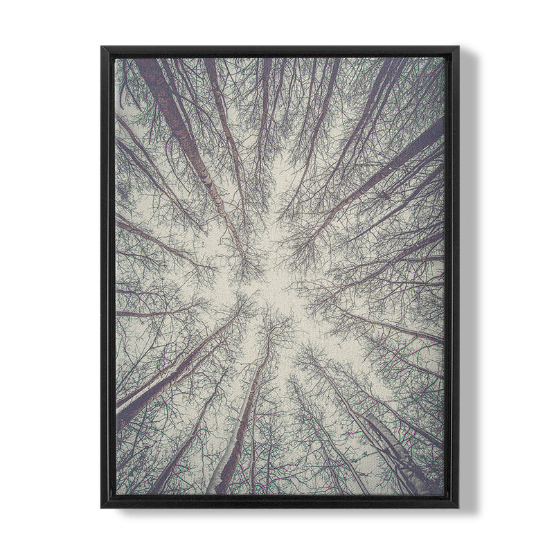 FOREST - FRAMED CANVAS - MI2602201