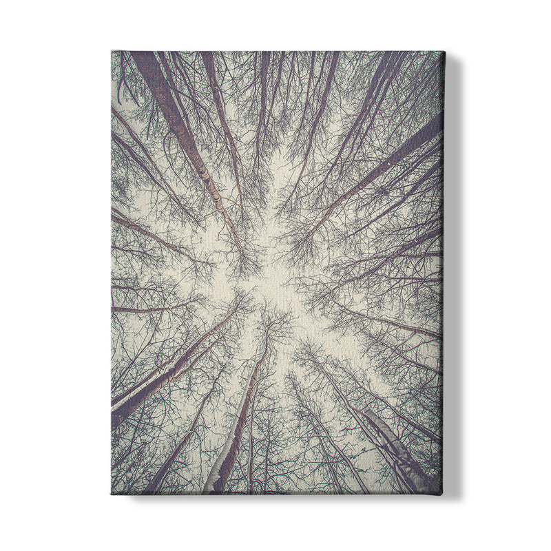 FOREST - CANVAS - MI2602201