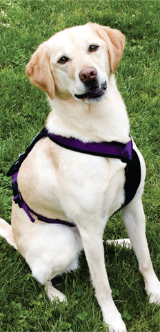 Lucy Treeline Trail Harness