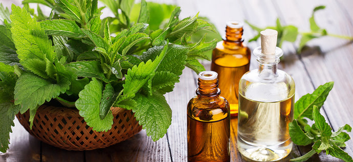 What is the Benefits of Peppermint Essential Oil