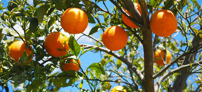 What is the Benefits of Orange Essential Oil