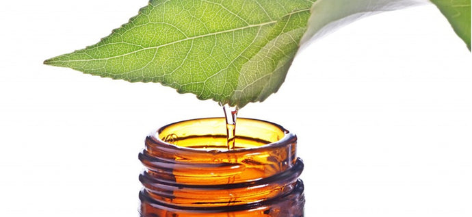 What is the Benefits of Tea Tree Essential Oil