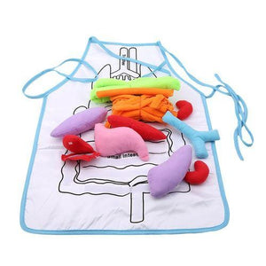 Multipurpose Anatomy Organ Apron