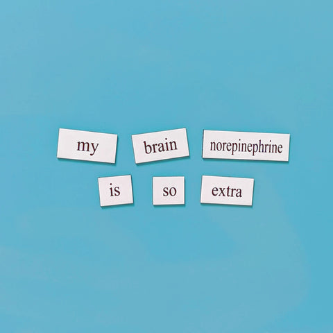 neuroscience word magnets set