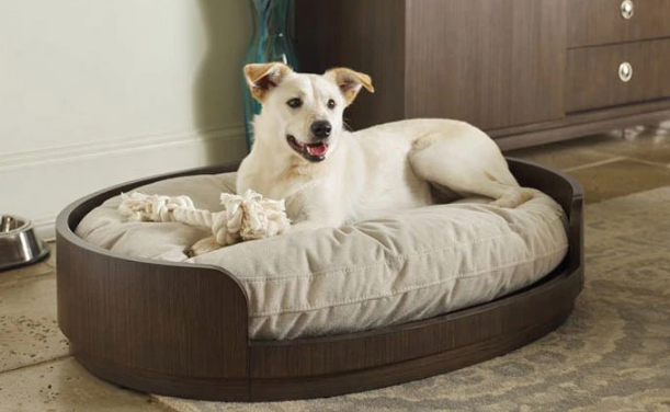 Cool & Unique Dog Beds for All Dogs