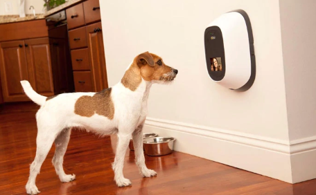 The Coolest Dog Gadgets And Products For All Dogs