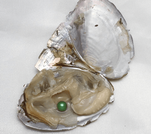 Oyster With Colourful Pearl Beads