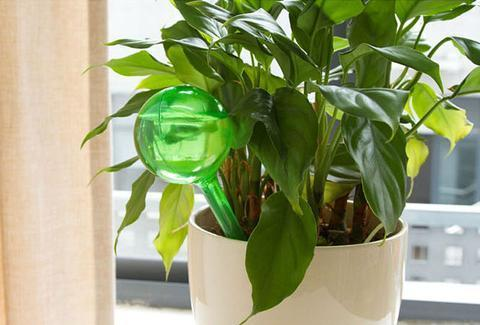 Watering Bulb Globes