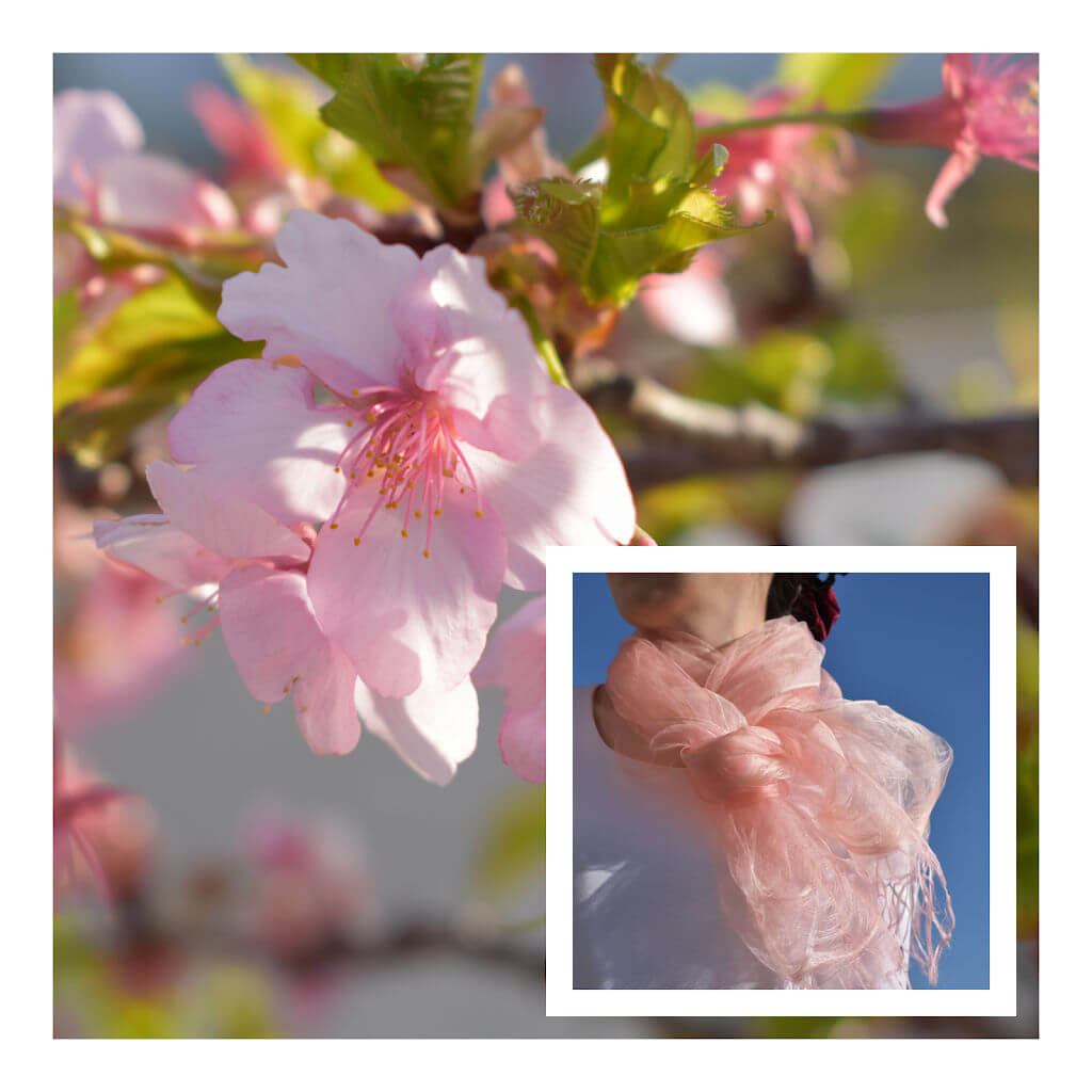 Japan Cherry - Sakura Pink Blossom and Pink Silk Stole Around Models Shoulders