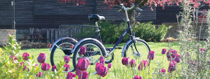 Pashley Picador Tricycle in Blue sitting behind a row of purple tulips in a park in Stratford-upon-Avon.