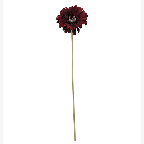 BURGUNDY OLD GERBERA