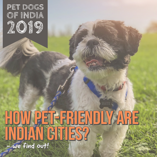 How 'pet-friendly' is your city? LANA Paws Survey 2019 Findings