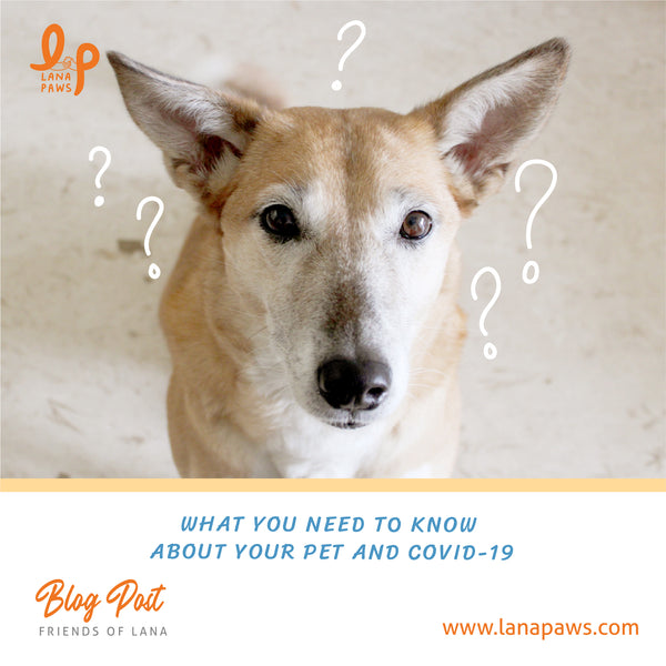 What You Need to Know About Your Pet and COVID-19