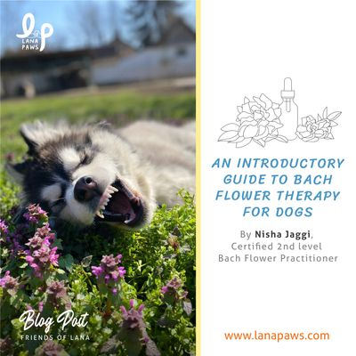 Lana Paws blog on bach flower remedies for dogs