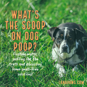 What's the scoop on dog poop?! - Why pick up after your dog?