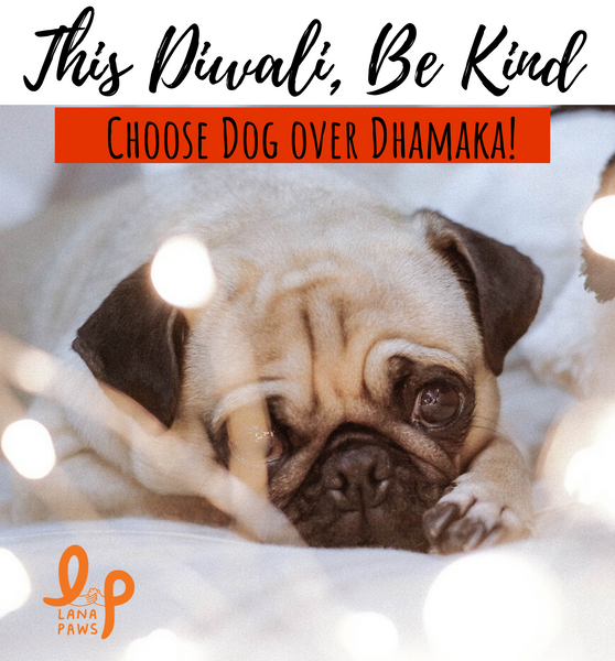 A Guide to Celebrating a Happy, Healthy & Safe Diwali with Pets