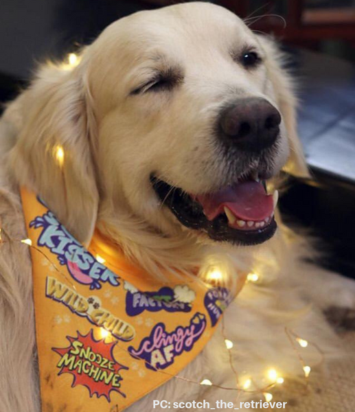 Furry Festivities - how to include your dog in fun and festivities!
