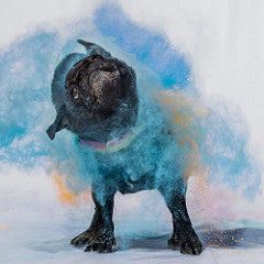 holi is not for dogs