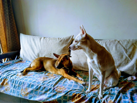 Ways to introduce your partner to your dog Lana Paws blog