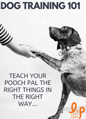 Lana Paws dog training tips India