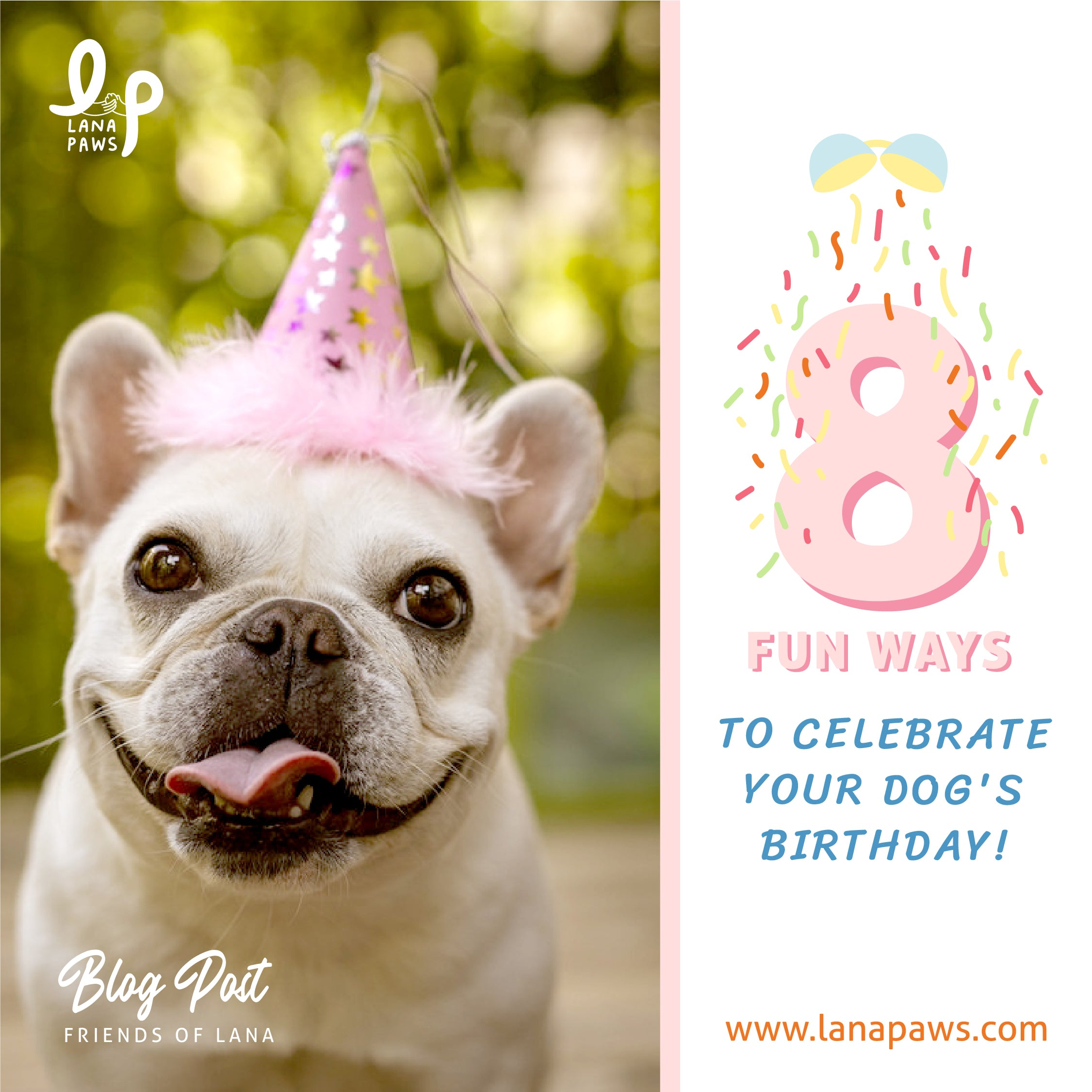 lana paws blog fun ways to celebrate your dog's birthday
