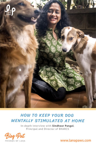 Lana Paws ways to keep your dog mentally stimulated at home