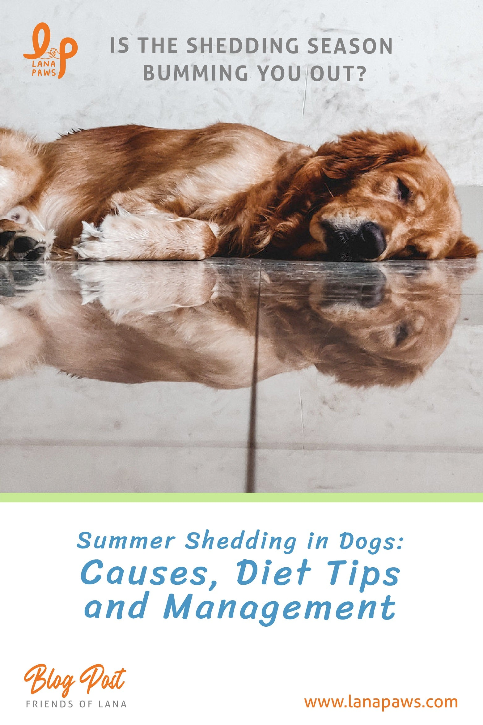 how to control shedding in dogs during summers