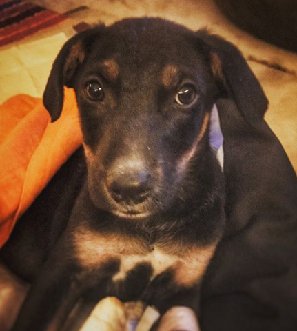 Lana Paws blog instagram dog stories