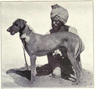 indigenous dogs of India Lana Paws blog