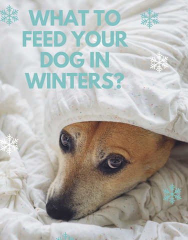 what to feed dogs in winters