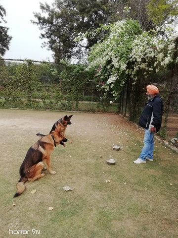 Lana Paws dog training for puppies India