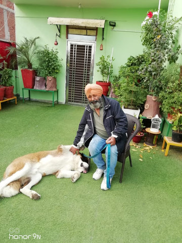 Lana Paws dog training for old dogs India