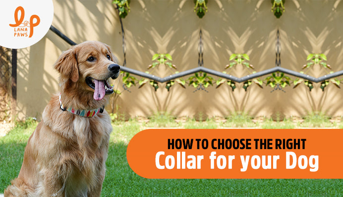 how-to-choose-right-collar-for-your-dog