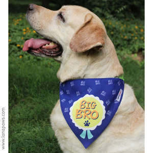 Lana Paws big brother dog bandana cute Labrador