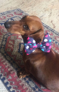 dog bow tie online Lana Paws