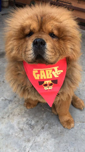 Lana Paws red Gabru dog bandana