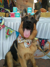 Doggy's Day Out - Adjustable Bowtie