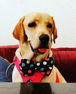 Lana Paws polka dots dog bow tie