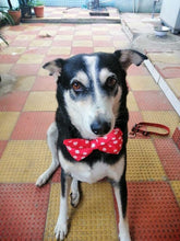 Red polka dots dog bow tie Lana Paws