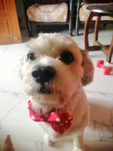 Red polka dots bow tie for dogs cute