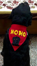 Cute handmade personalized dog clothes for large dogs Lana Paws