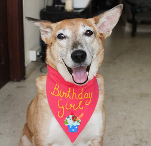 Birthday Girl! - Handmade Adjustable Dog Bandana